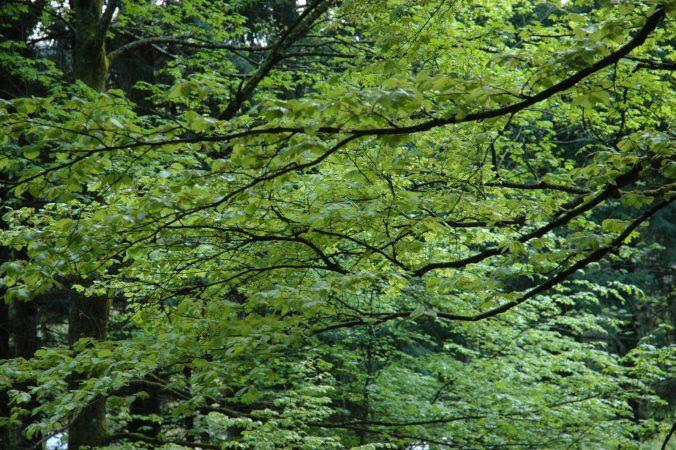 Wald bei Salm